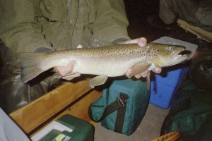 22-inch brown caught on the AuSable's Holy Waters in August 2007 on a black Houghton Lake Blaster. For me the epitomy of brown trout fishing is done at night, when there is no moon and you drift slowly down the river without lights casting to likely spots, waiting to hear the slashing strike or feeling it before hammering the fly home. This kind of fishing is called mousing and it's not for everyone, but if you want a shot at a big fish once in a while, this is the way to do it. Interestingly, the trout will slash at the fly and if they aren't stuck by it, will hit at it again. They think it's a kind of vole which has it's territory on both sides of the river and goes back and forth all night. Mousing for trout. You'll love it or hate it.