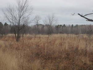 BAld eagle flying in right middle of photo,and presence of other eagles led us to the carcass of a deer killed the night before. Nature proviides all sorts of signs if we learn to read them.