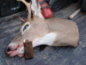 Dugout dope box and illegal deer, also not an uncommon occurence in Michigan during deer season.