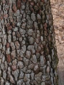 Snakeskin, or bark?
