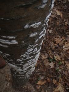 Vertical Black and White -- lichen at eye-catching best.
