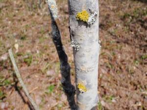 Deward area lichen color show.