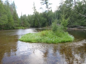 Forget Me Not Island, North Branch AuSable River