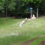 Randomonics: Cowhenge -- between Newberry and Deer Park. Look for cattle crossing signs, podnah...