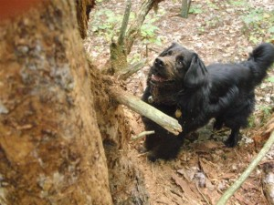 Logger Dog