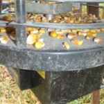 corn in the feeder, which is on...