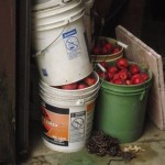 Bait pails by the open door in the garage.