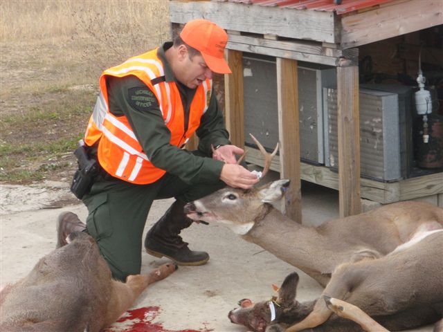 CO Mike Borkovitch checking tagged deer at a processor's.