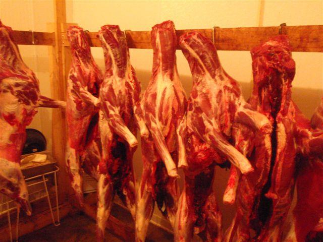 Venison awaiting the butcher.