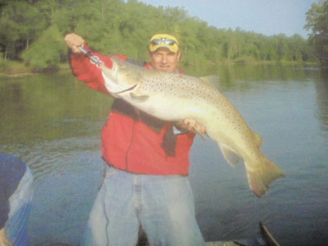 World record brown trout from Manistee River?