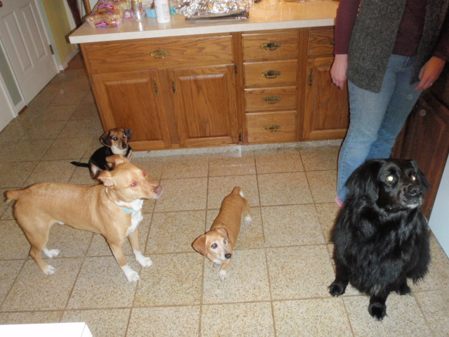 The family muttskers. From left, MacThor, Cooper, Buster, and Shanahan.