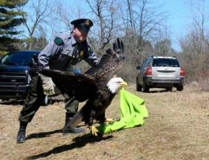 Jeremy Payne eagle release