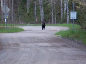 lezlee bear 3