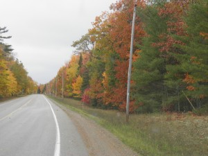 Color is still good just east of Musky State Park:. Lake Superior is short distance to the right (north) through the trees you see.