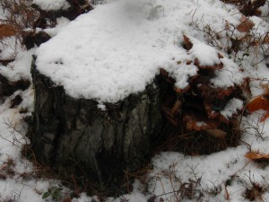 Snowshrooms (Not for Thy Feet)