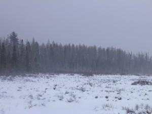 Moose marsh.