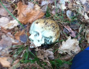 CO Doug Hermanson retrieved this human skull up by Bond Falls on opening day or the day after.