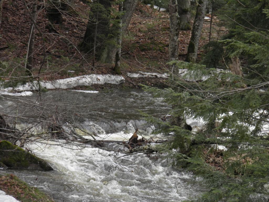 A nearby stream.