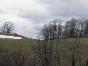 Still snow in hills around Herman.