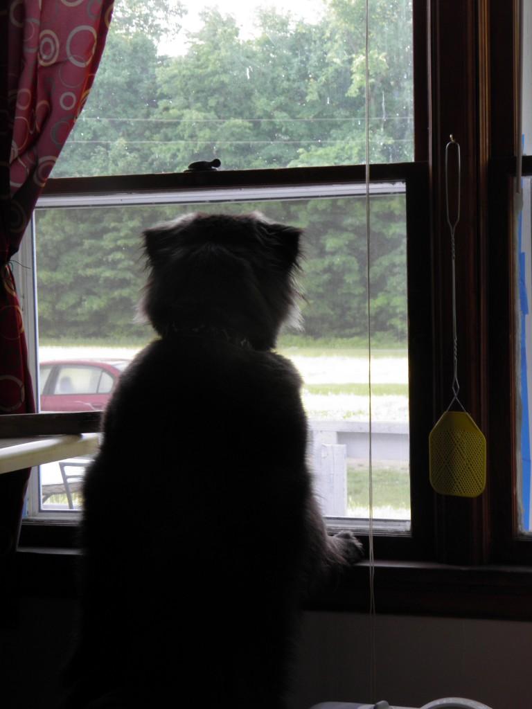Bard dog on window duty.