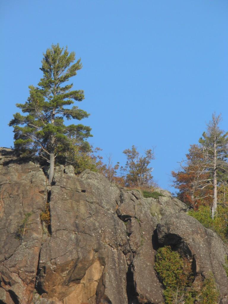 Lone pine, hanging on.