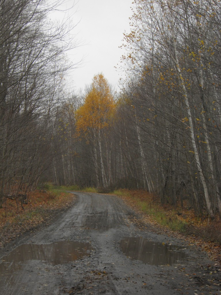Looking for moose, Drummond Lake Road, in the rain.