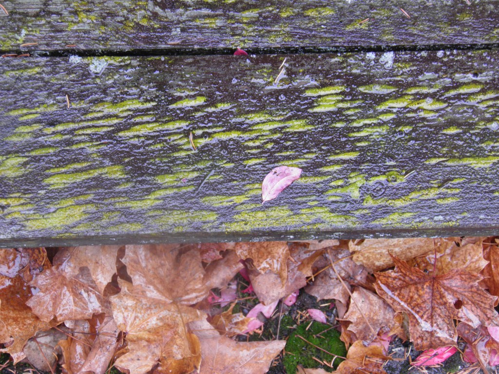 Wood, moss, leaves and color, all aging together.