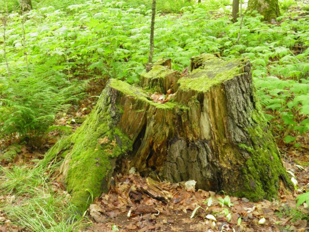 Stumpage study in green