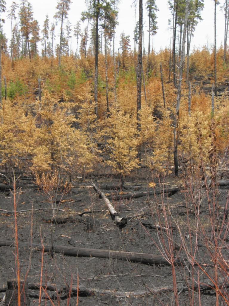 Burn -- .hrooms next year yumyumeatumup.