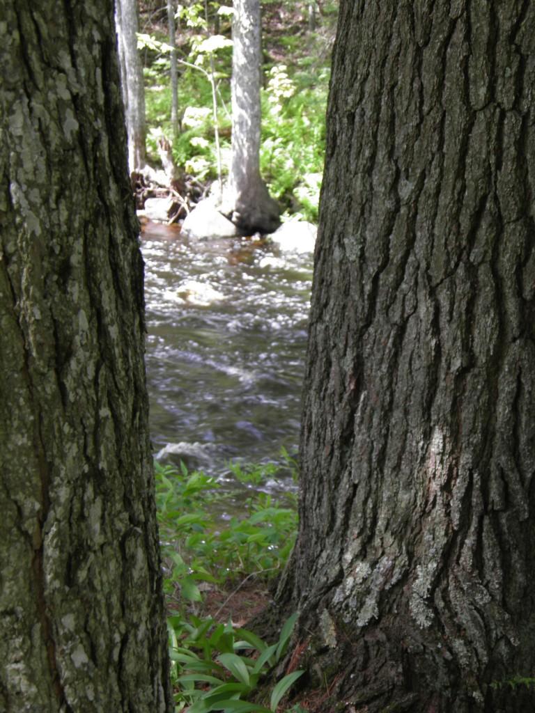 Perch River scene