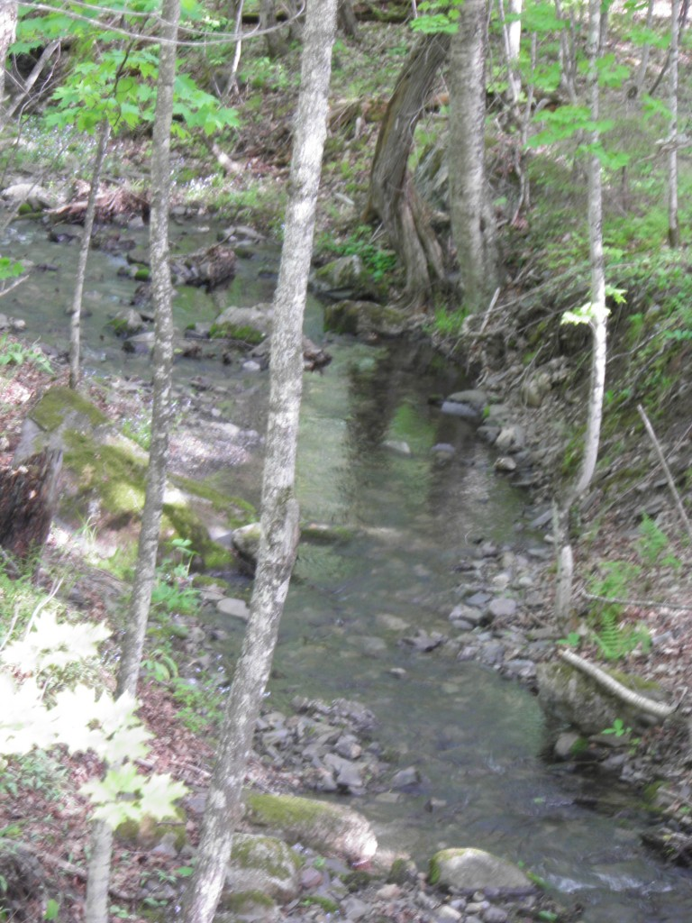 Unnamed stream in Herman Hills