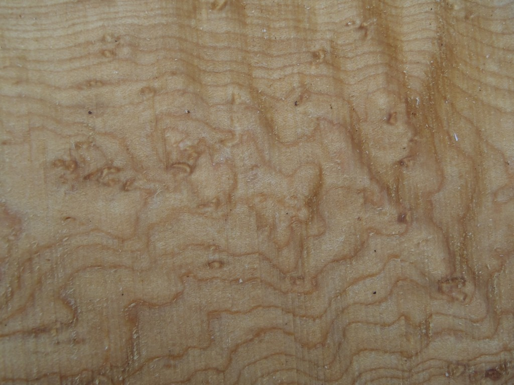 Birdeye maple, up close and raw, just as the saw exposes it.